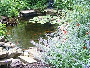 Butterflies at Pond
