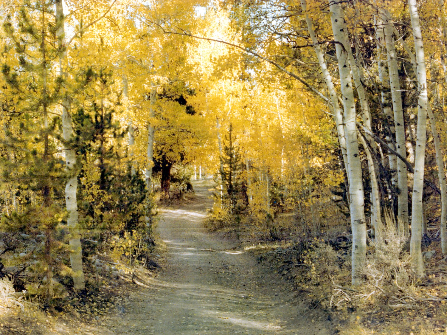 Autumn Road with Yellow Leaves